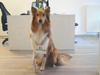 Bürohund erlaubt? 5 Vorteile für Hund und Mensch!