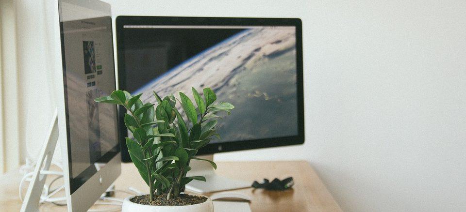Zwei Macintosh Computer stehen auf einem Tisch. Im Vordergrund ist eine kleine Pflanze zu sehen.
